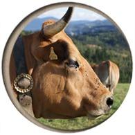 Venta de Terneros y Vacas Asturianas de los Valles en Bizkaia y Euskadi