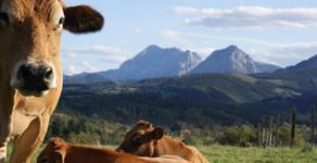 Venta directa de carne de ternera y vaca a domicilio